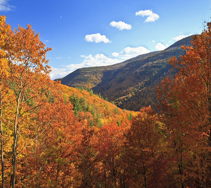 Trees covering all the mountains during a sunny day. The leaves on the trees suggest it is the fall