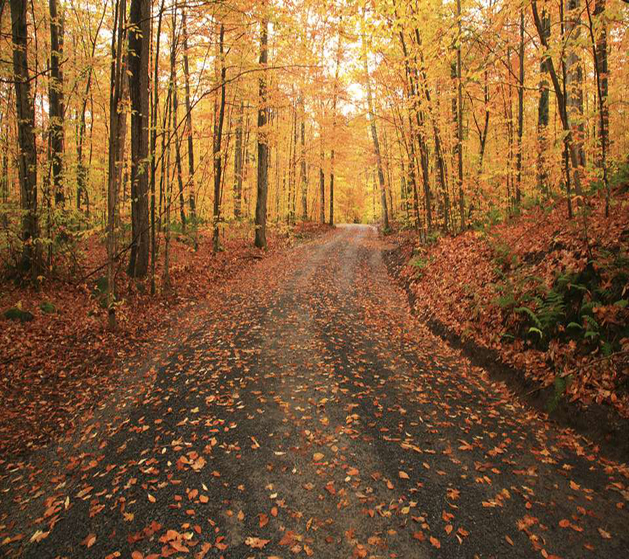 A road covered in leaves surrounded by trees during the fall