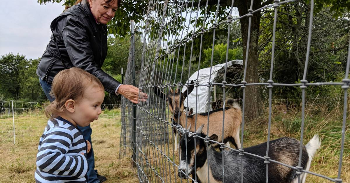 a woman and a toddler visiting with goats