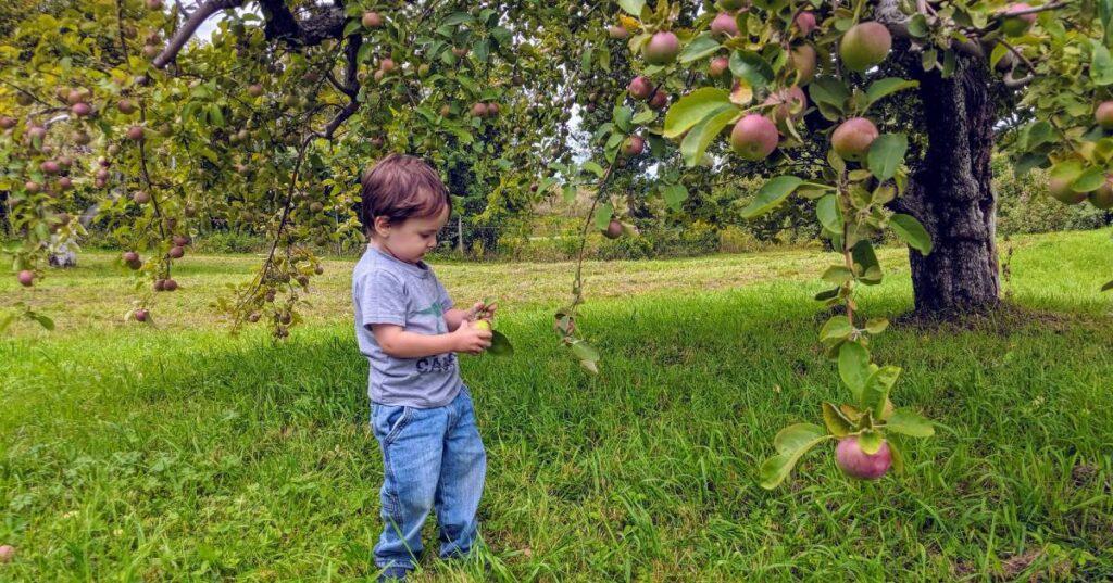 Hicks Orchard Apple Picking