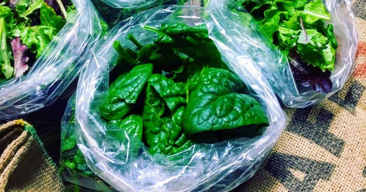 bags of spinach